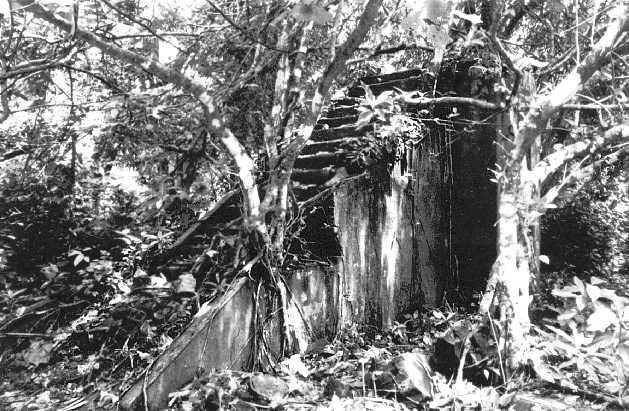 The remains of Captain O'Keefe's home on Yap – photographed only a few years after his disappearance, and already reverting rapidly to jungle.