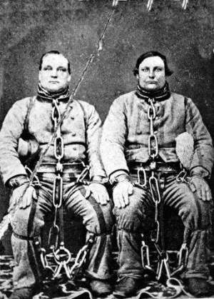 Convicts formed up into a chain gang in Sydney.