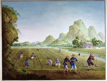 Peasants work the fields outside a Qing-era village. This sanitised scene gives little clue as to the drudgery of most peasants' lives.