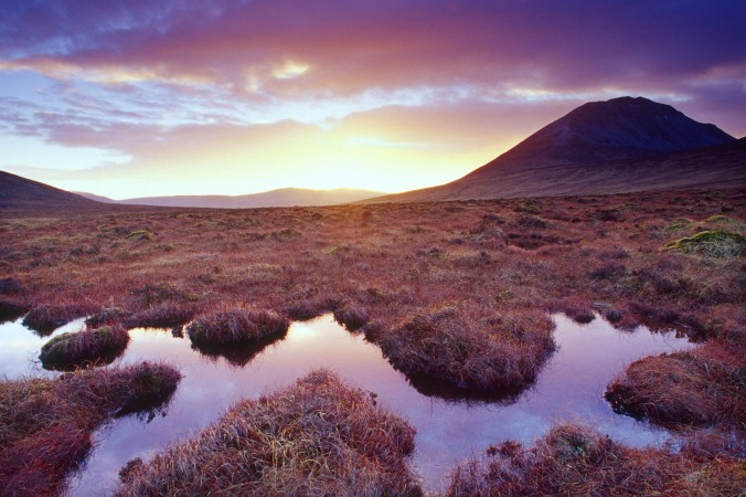Bog pool beneath Errigal Mountain, County Donegal, Ireland. Photo by Gareth McCormack.