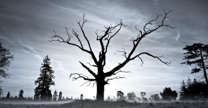 dry tree 2